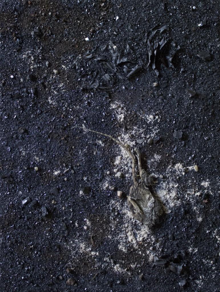 fossile-300-dpi